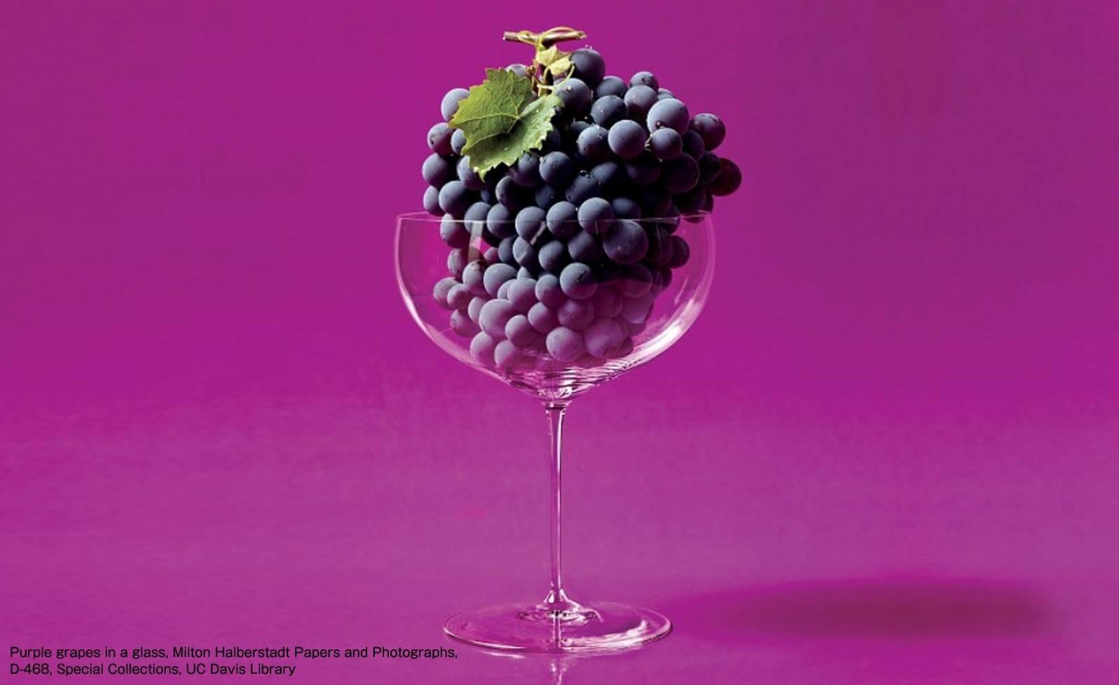 【カリフォルニアワイン初歩の初歩】新鮮なブドウだけで造っているのがワイン
