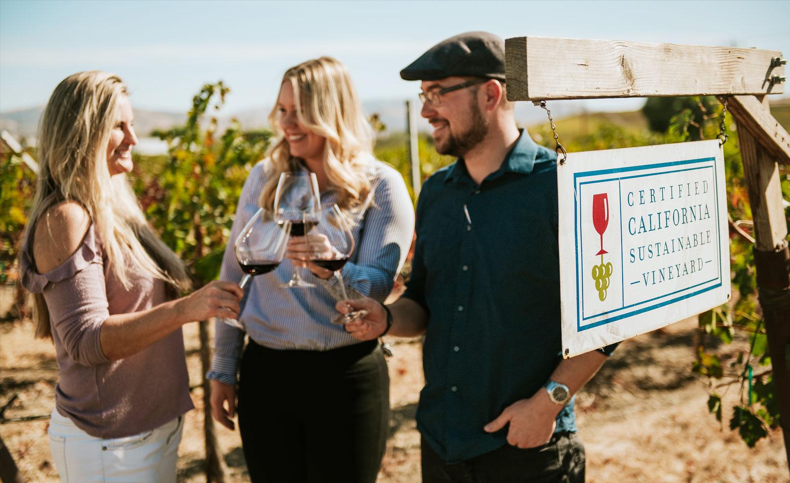 健やかに育まれたブドウ、サステイナブルなワイン造り