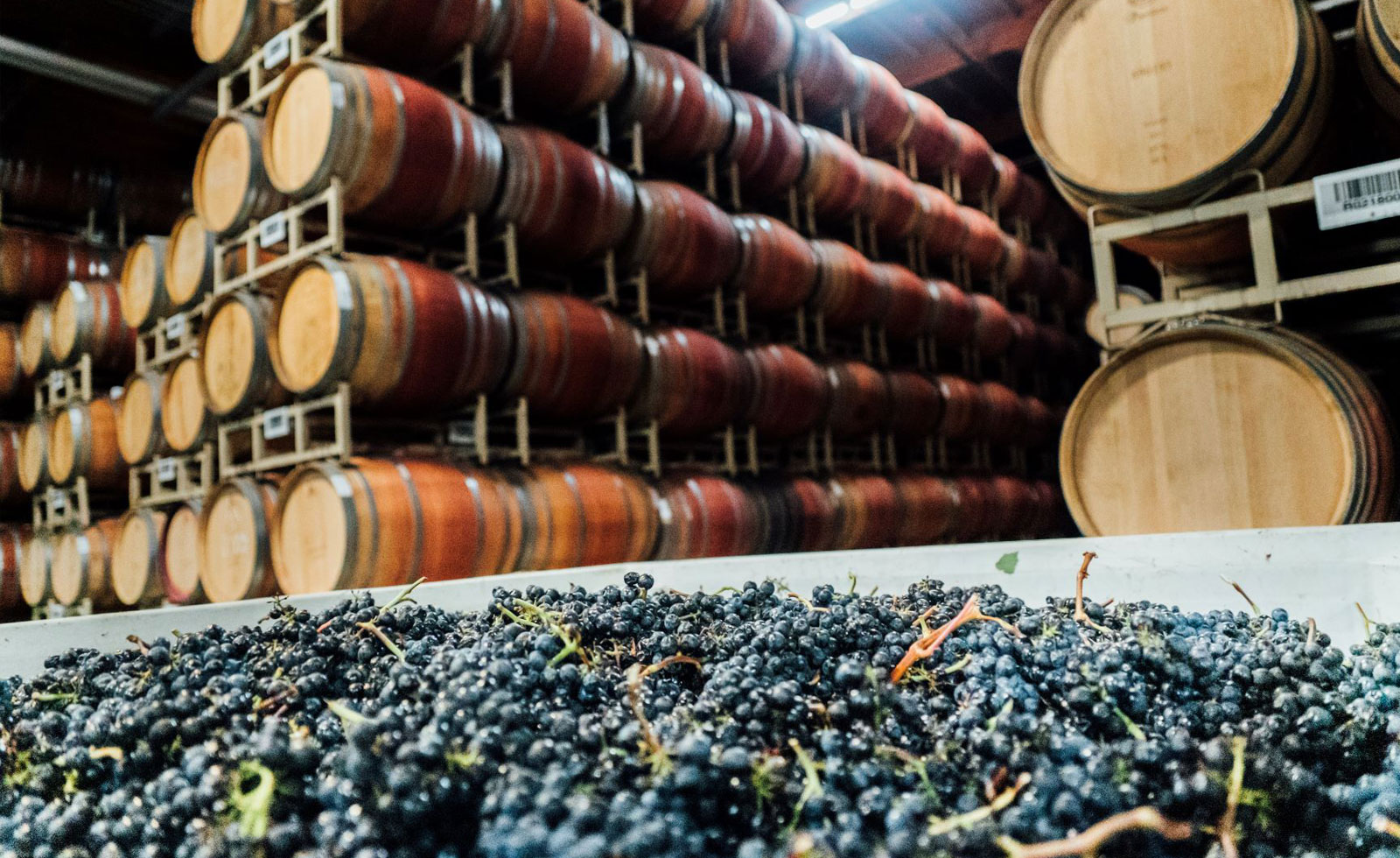 オーク樽が紡ぎ出すカリフォルニアワインだからこそ、の魅力