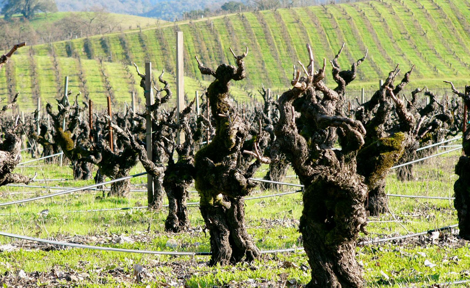 【カリフォルニアワイン初歩の初歩】ジンファンデルは「ワインのコーラ」