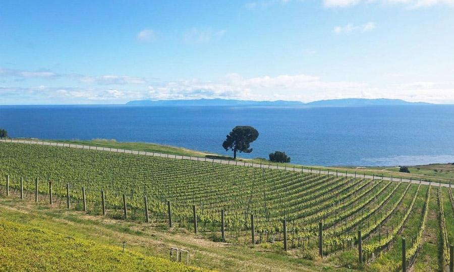 新しい政府認定ブドウ栽培地域(AVA)が誕生しました